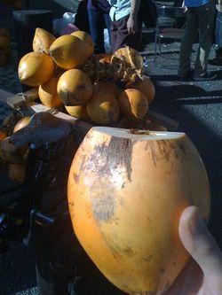 Coconuts3