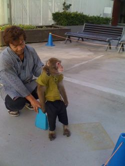 Monkeyshow