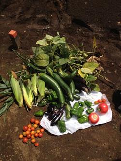 野菜を作る